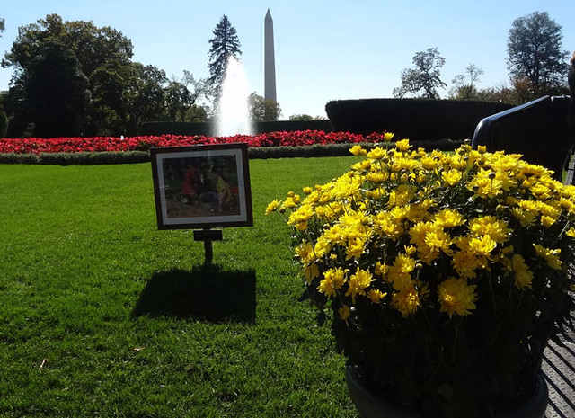 flowers-fountain-monument