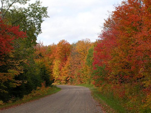 With fall color at its best, finding an abundance of pretty leaves for your digital leaf press will be easy.  Visiting your national forests can be an enjoyable activity for one and all.  This photo comes from the Ottawa National Forest.  Photo courtesy: Susan Trull