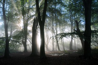Magic Woodland