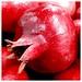 Small photo of Whole Pomegranate