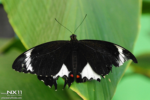 WILD LIFE Sydney Zoo butterfly