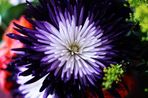 Flower (79)