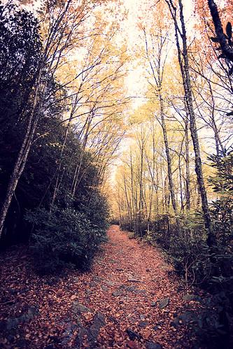 mountain color fall leaves forest woods path northcarolina harris whitesidemountain harrisclayton