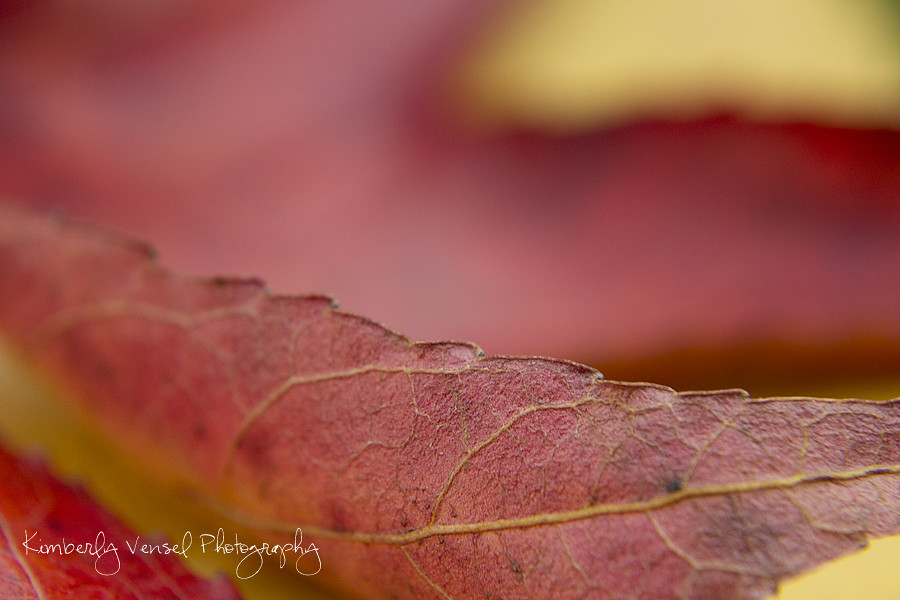 P52 - Leaves