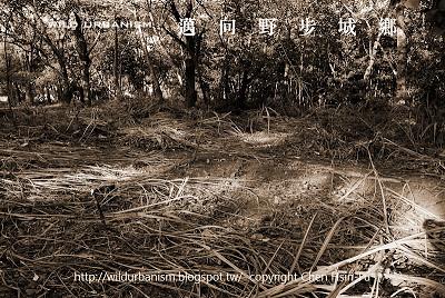 已清除完成的國中前雜木林