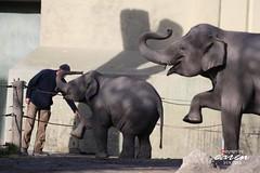Elefantenbaby LUDWIG
