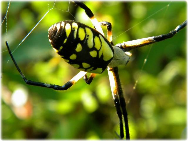 writing spider bite