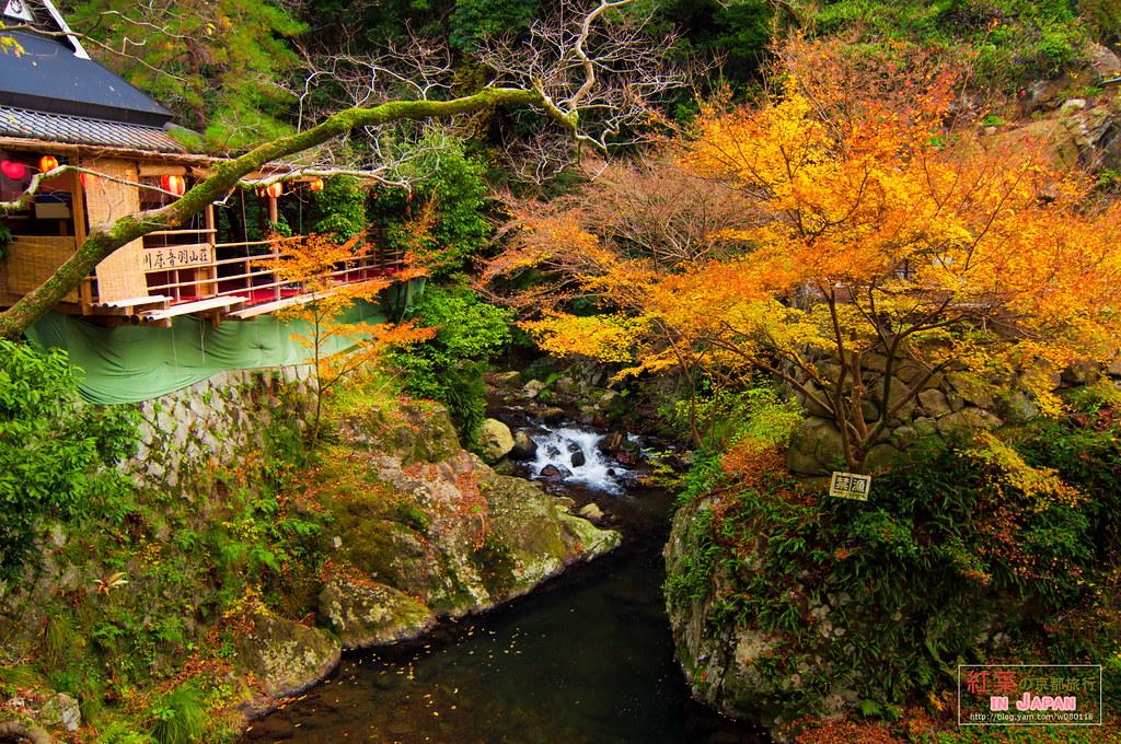 2012.楓日本。箕面瀑布