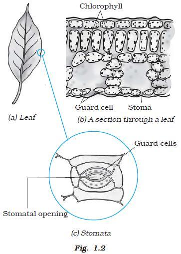 Ncert Class Vii Science Chapter 1 Nutrition In Plants Aglasem Schools
