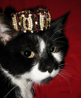 His Royal Highness Montana de Montecore the Cat with his Red Crown