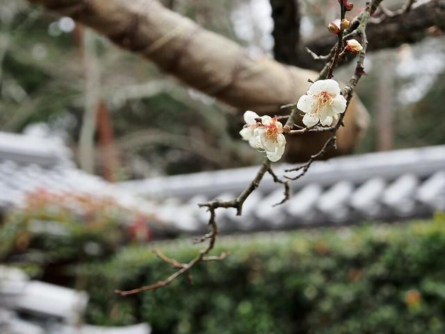 京都 聽松院