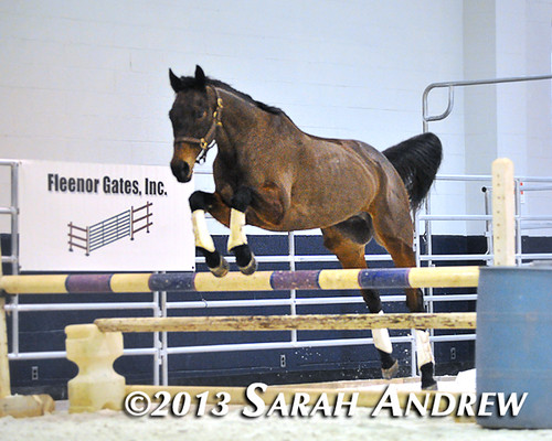 Suave Jazz at the MD Horse World Expo
