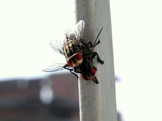 A Bugs Love