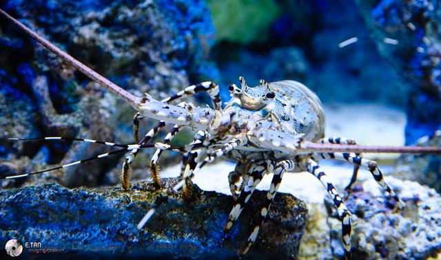S.E.A Aquarium - 011