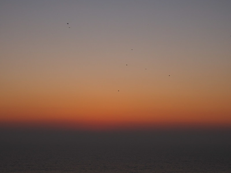 Birds Flying over Sunset