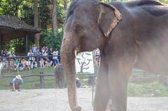 elephant-25