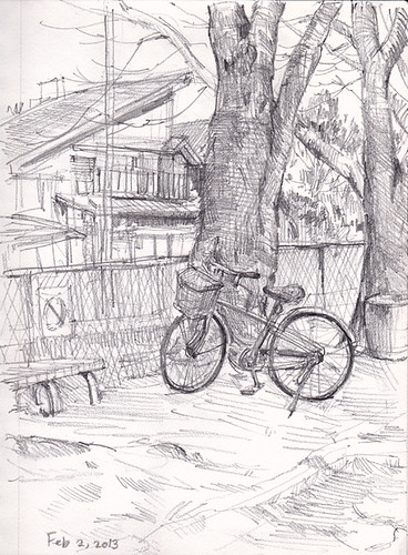 bicycle and cherry trees