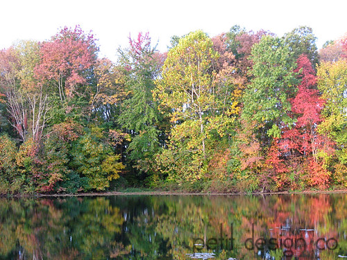 fall trees and lake