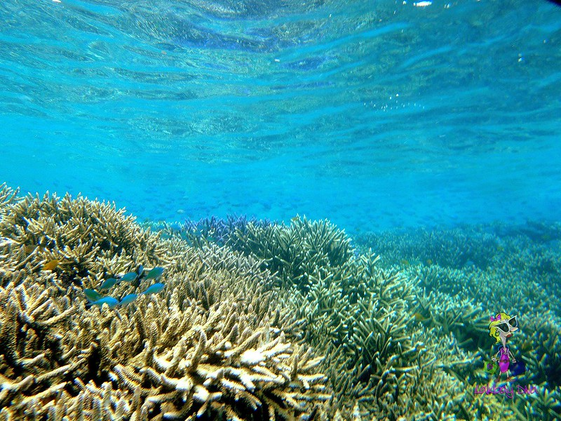 The healthy corals of Tuble sanctuary