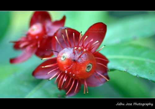 Flower with Eyes by Jidhu Jose