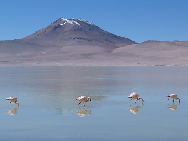 Altiplano de Bolivia (Reserva de fauna alto andina Eduardo Avaroa)