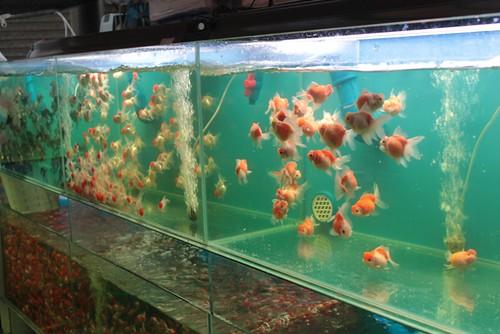 Vissen op de goudvismarkt!