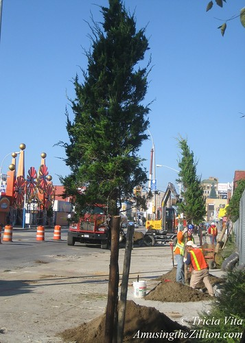 Trees on Surf Avenue