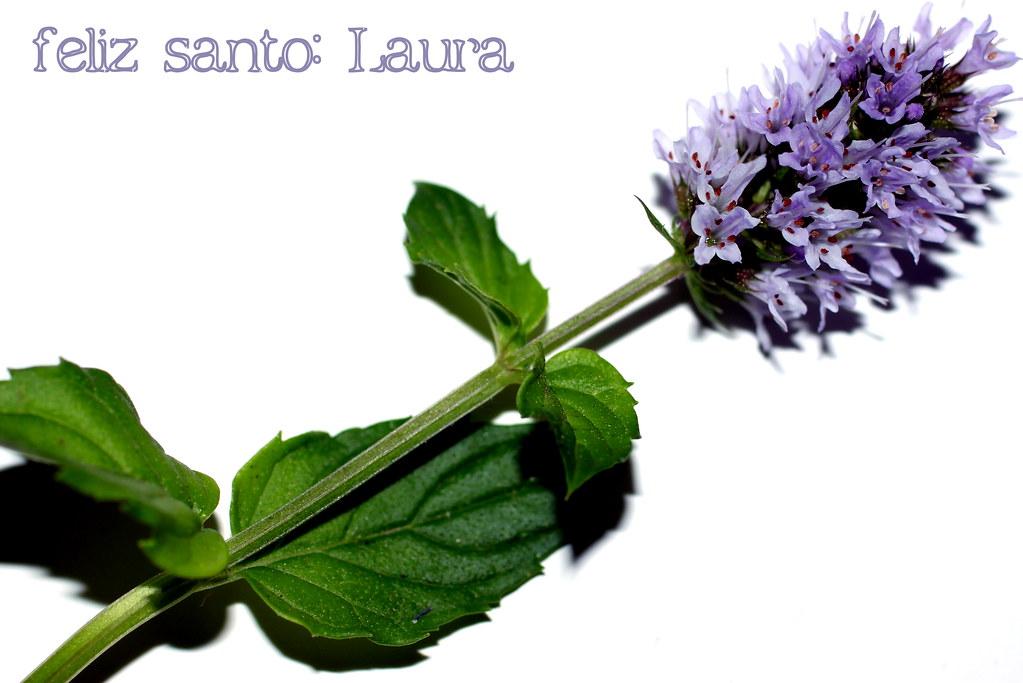 Santa Laura, 19 de octubre