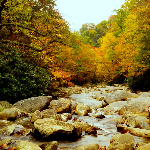 autumn color nature river countryside tennessee smokymountains naturesfinest westpronglittlepigeonriver blinkagain