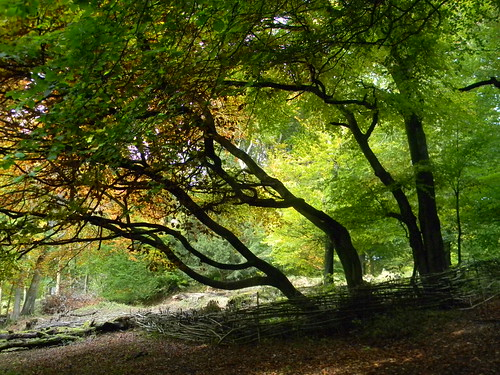 Trees - Pulpit Hill
