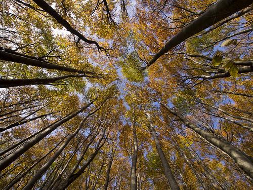 [フリー画像素材] 自然風景, 森林, 紅葉・黄葉 ID:201211021200