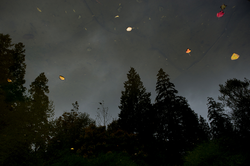 Leaf Stars