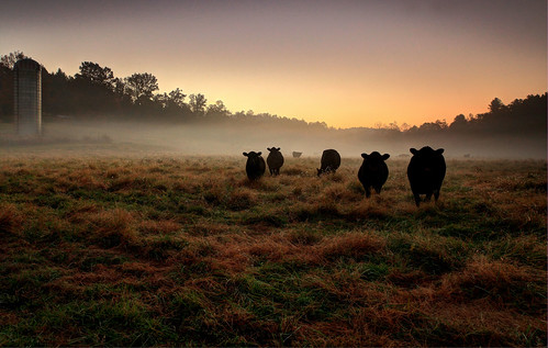 "autumn usa fall canon landscape nc cows mark farm silhouettes 5d ii"" 2012 farm"" thegalaxy ""canon point"" colors"" ""farm ""north land"" carolina"" ""celestial ""cattle ""vibrant 24mm105mm"" rememberthatmomentlevel4 rememberthatmomentlevel1 rememberthatmomentlevel2 rememberthatmomentlevel3 rememberthatmomentlevel7 bestevergoldenartists rememberthatmomentlevel9 rememberthatmomentlevel5 rememberthatmomentlevel6 rememberthatmomentlevel8 rememberthatmomentlevel10 ""cattle"" vigilantphotographersunite vpu2 vpu3 vpu4 vpu5 vpu6 vpu7 vpu8 vpu9 vpu10"