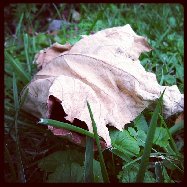 Grass: autumn's leaf on summer's grass #photoadayagl