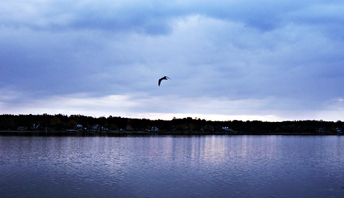 blue trees ohio wild sky usa cloud lake bird beach nature water clouds sunrise geotagged outdoors flying photo wings photos wildlife sony picture lakemilton craigbeach sonya230 carlrhodes carl4876