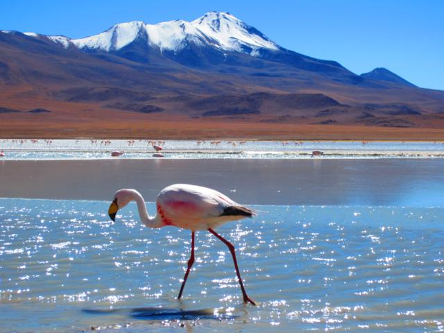 Walking with flamingos, Bolivia. Yatisha Patel, Wolverhampton, UK
