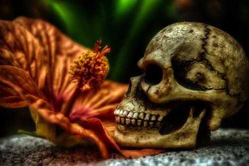 flower macro halloween skull nikon bokeh d200 hdr alittlebitcrazy bokehthursday hbmike2000