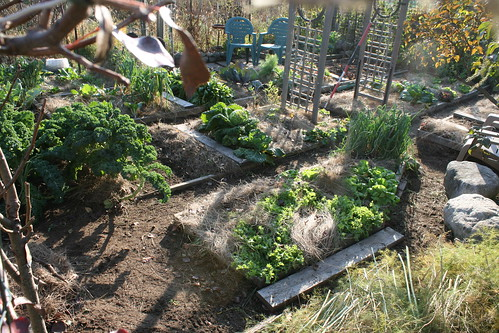 october vegetable garden plot 012