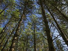 [フリー画像素材] 自然風景, 森林, 樹木 ID:201211041200