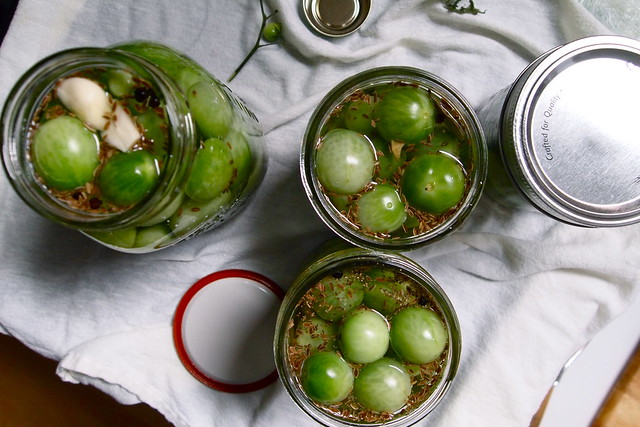 Green cherry tomatoes a-picklin'