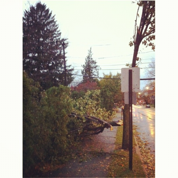 The other tree we lost. #damnbradfordpears #squaready #sandy #treedown