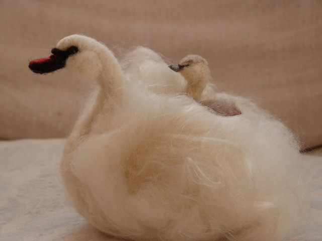swan and chick 2