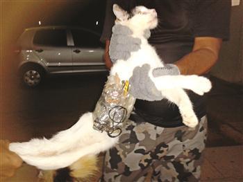 Brazilian inmate cat