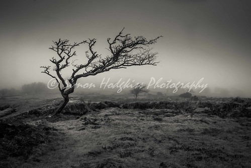 uk trees winter mist fog dark blackwhite seasons devon dartmoor blinkagain lightroom4