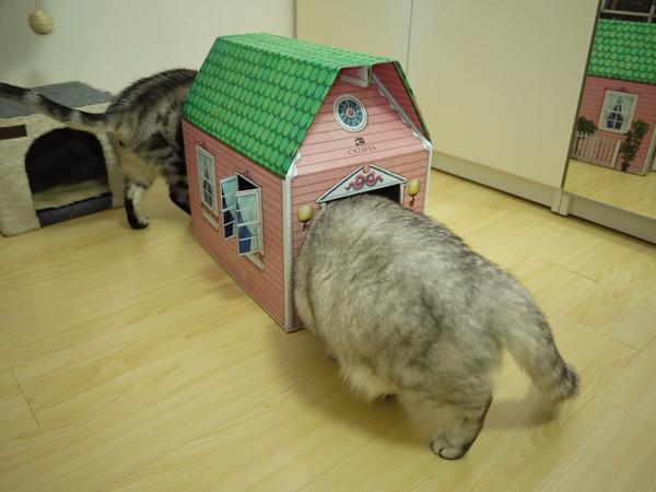 4門口大小剛好一隻貓可以進去