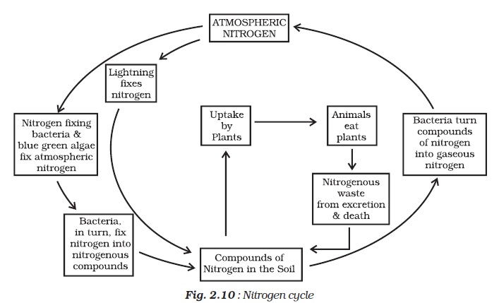 Ncert class viii science chapter 2 microorganisms friend and foe ncert class viii science chapter 2 microorganisms friend and foe aglasem schools ccuart Image collections