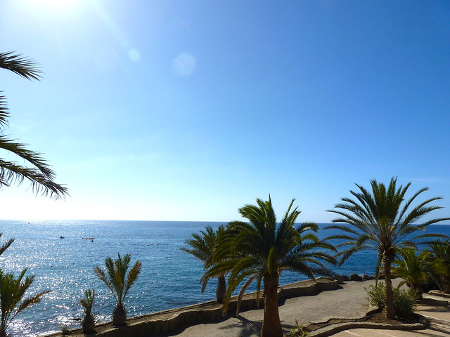 canaries, Canary Islands, gran canaria, Holiday, holiday photos, palm trees, parrot, summer, sun, where to stay in gran canaria,what to see and do in gran canaria,