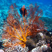 The amazing underwaterworld when you are snorkling at Menjangan - Indonesia by Ferdi's - World