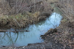 Wetland Below Sediment Pond