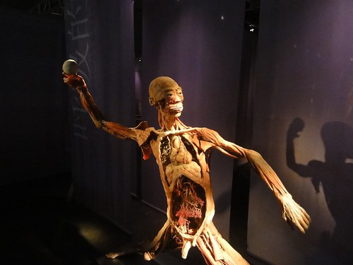 Human Bodies Exhibition @ Venetian Macau